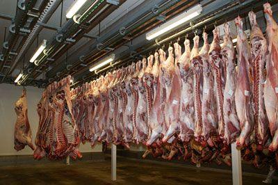 rinder_schlachthof_meat-640721_1920